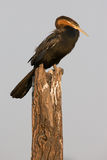 Darter resting on a log stock photography