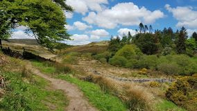 Dartmoor国家公园 在Postbridge Dartmoor附近 库存图片