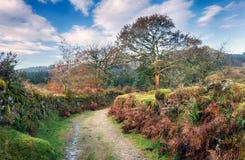Dartmoor车道 库存照片