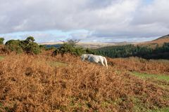 Dartmoor το φθινόπωρο κοντά σε Burrator Στοκ φωτογραφία με δικαίωμα ελεύθερης χρήσης