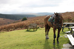 Dartmoor, Девон в Англии с лошадью и ландшафтом стоковые фото