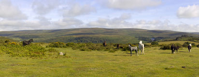 Dartmoor stock images