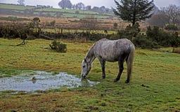 dartmoor immagine stock