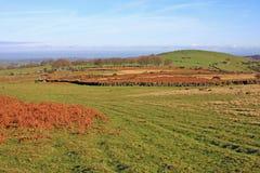 Dartmoor Stock Photography