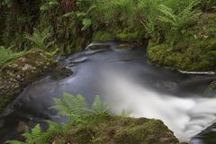 Dartmoor Brook Royalty Free Stock Photos