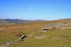 dartmoor devon Royaltyfria Foton