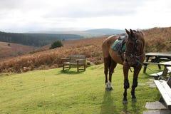 Dartmoor, Devon en Angleterre avec le cheval et le paysage Photos stock