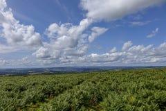 Dartmoor Devon England UK Royaltyfri Bild