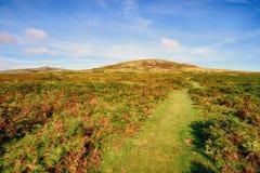 Dartmoor in Devon Stock Images