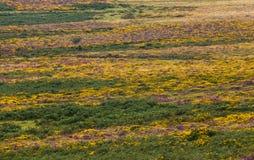 Dartmoor drzewo i kwiaty Zdjęcia Stock