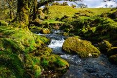 Dartmoor England flod Arkivbilder