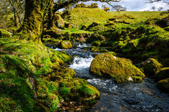 Dartmoor england river Stock Images