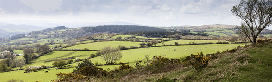 Dartmoor Farmland. Farmers fields on Dartmoor near Mortenhampstead with horses and sheep royalty free stock photos
