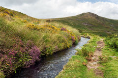 Dartmoor Leat. Heather growing alongside the Wheal Friendship leat on Dartmoor as it flows alongside Tavy Cleave Stock Photo