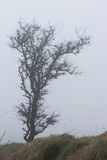 Dartmoor mgła Obrazy Royalty Free