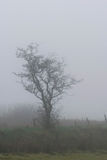 Dartmoor mgła Zdjęcia Royalty Free