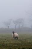 Dartmoor mgła Fotografia Stock