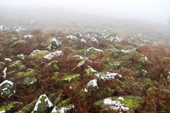 Dartmoor mgła Fotografia Royalty Free
