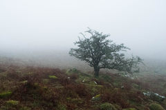 Dartmoor mgła Zdjęcie Royalty Free