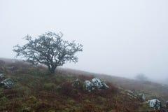 Dartmoor mgła Obraz Stock