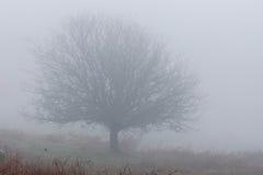 Dartmoor mgła Zdjęcia Stock