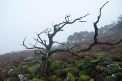 Dartmoor mgła Obrazy Stock