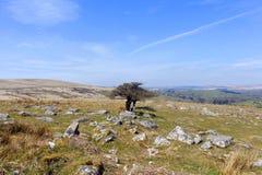 Dartmoor Nationaal Park Devon Combestone Royalty-vrije Stock Foto's