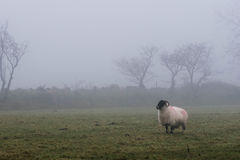 Dartmoor-Nebel stockfotos