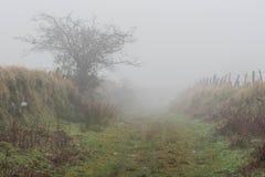 Dartmoor-Nebel lizenzfreie stockfotografie
