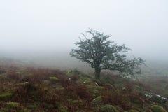 Dartmoor-Nebel lizenzfreies stockfoto
