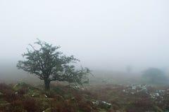 Dartmoor-Nebel lizenzfreies stockbild