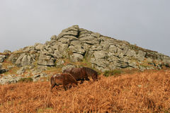 Dartmoor pony. Wild ponies in front of granite tor Stock Photo