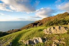 Dartmoor Pony at Rame in Cornwall Stock Photos