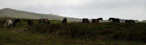 Dartmoor Pony Silhouettes Royalty Free Stock Photos