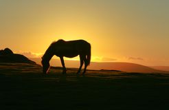 Dartmoor pony at sunset Stock Image