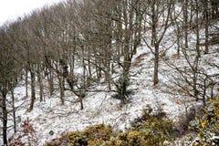 Dartmoor Royaume-Uni pendant la bête du 2018 est photographie stock libre de droits