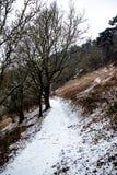Dartmoor Royaume-Uni pendant la bête du 2018 est image libre de droits