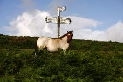 Dartmoor Signpost Royalty Free Stock Photography