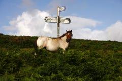 Dartmoor Signpost. Wild ponies roam the highlands of Dartmoor in Devon Royalty Free Stock Photography