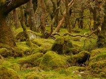 Dartmoor skogsmark Arkivbilder