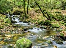 Dartmoor ström Royaltyfri Bild