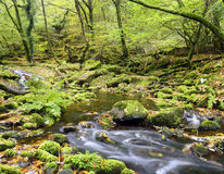 Dartmoor Stream Stock Photo