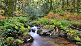 Dartmoor Tal-Strom Lizenzfreies Stockbild