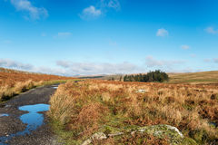 Dartmoor Track Royalty Free Stock Images