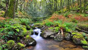 Dartmoor Valley Stream Royalty Free Stock Image