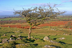 Dartmoor Royalty Free Stock Photos