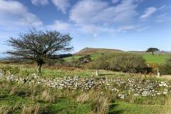 Dartmoormening royalty-vrije stock afbeeldingen