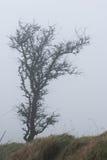 Dartmoormist Royalty-vrije Stock Afbeeldingen