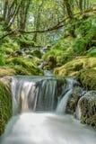 Dartmoors geheime stroom Royalty-vrije Stock Afbeeldingen