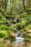 Dartmoors secret stream. Taken about 1/2 mile downstream of Venford reservoir on Dartmoor national park Royalty Free Stock Photos